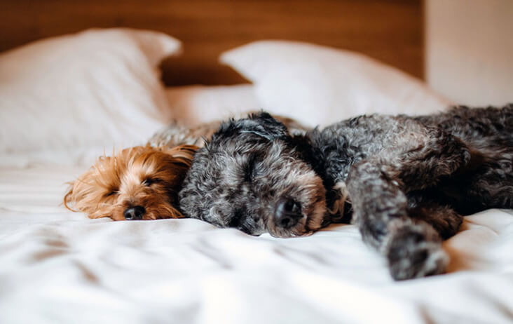 Multi-Pet Households. Can They Work? You Bet! Two dogs sleeping together.
