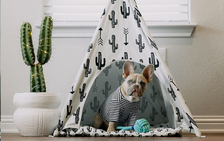 The funnest ways to entertain your dog indoors: dog in a tipee.
