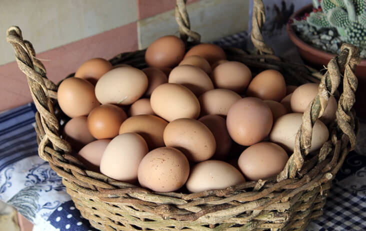 The Best Foods To Calm A Dog For Bonfire Night, Eggs