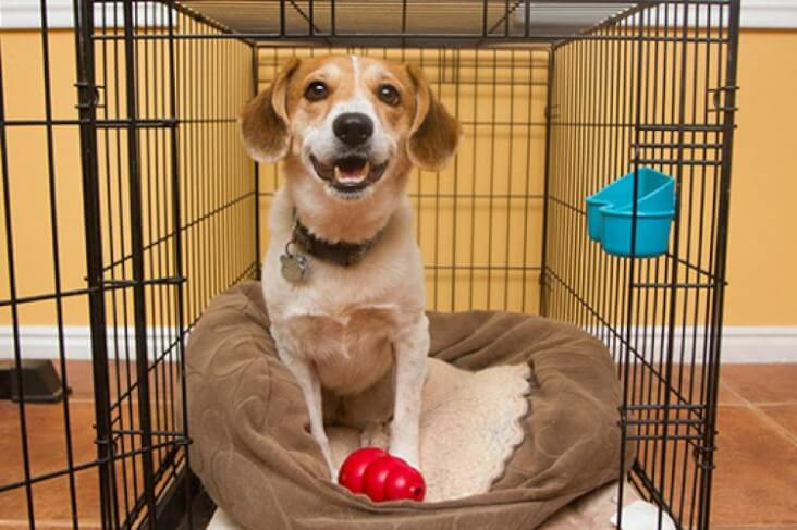 4 Reasons Why Dogs Get Scared On Bonfire Night: A happy dog in a crate.