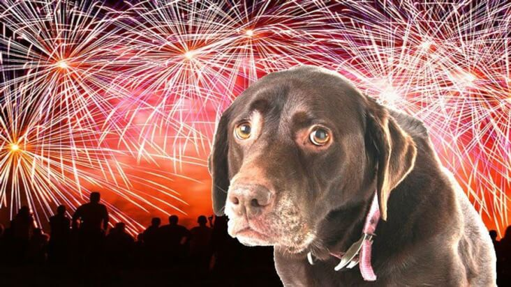 4 Reasons Why Dogs Get Scared On Bonfire Night: Scared dog surrounded by a sky full of fireworks.