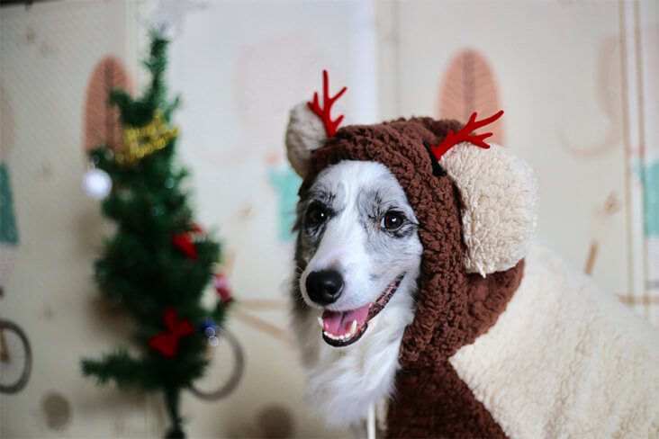 How To Have A Cracking Christmas With Your Furry Friend: Dog In A Reindeer Jumper