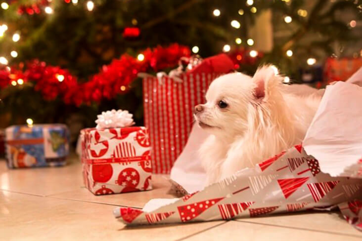How To Have A Cracking Christmas With Your Furry Friend: Dog With A Present