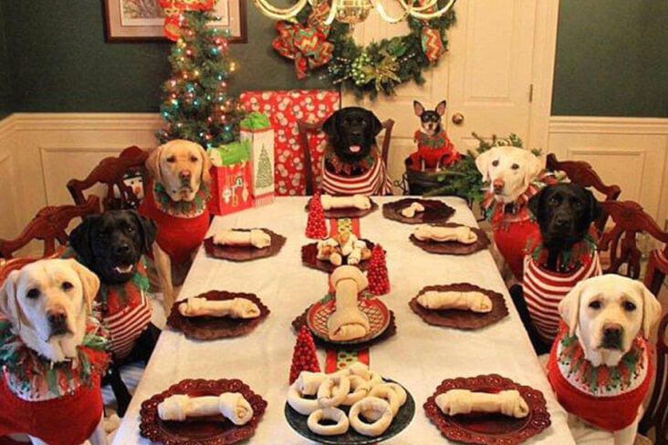 How To Have A Cracking Christmas With Your Furry Friend: Dog's Having Christmas Dinner